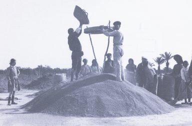 Segadors de l'arròs